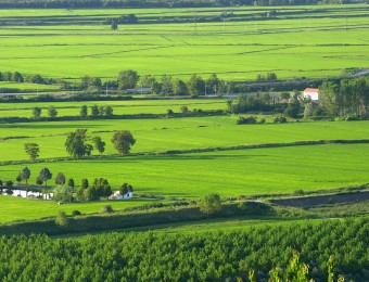 The Green Rice Fields of Vercelli