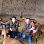 Chèvres, amour et volupté