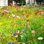 Less pesticides near schools and green spaces