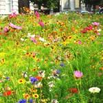 Moins de pesticides à proximité des écoles et dans les espaces verts