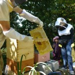 Aspiring beekeepers have never been so many