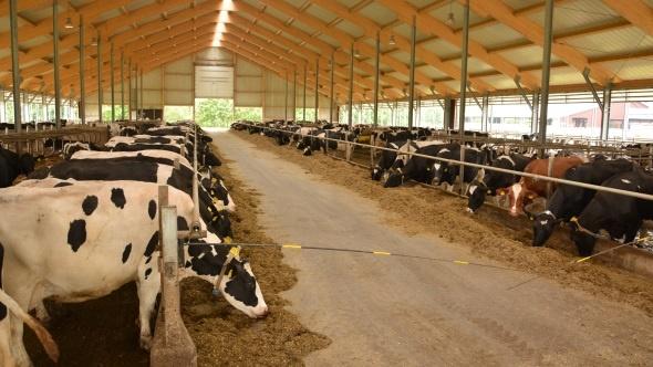 mobilisation dans les heures qui viennent contre la ferme des 1000 vaches alimentation. Black Bedroom Furniture Sets. Home Design Ideas