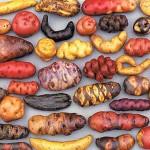 « Gastro-diplomatie » au Pérou
