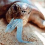 Paris, capitale mondiale de la fin des sacs en plastique?