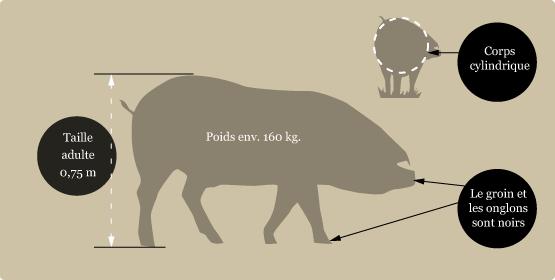 le-porc-noir-1