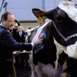 François hollande at the paris international agricultural show