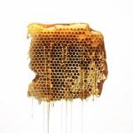 Lune de Miel, une fondation pour sauver les abeilles