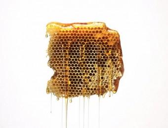 miel-abeille