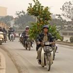 Au Vietnam, les kumquats du nouvel an victimes des pesticides