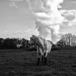 Cows keep on burping, so what can be done?
