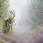 Les chiffres clefs de la biodiversité en France