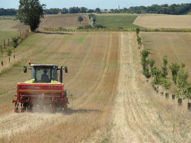 7-Delozzo-tracteur-agroforesterie