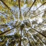 Agroforesterie : les arbres à notre secours