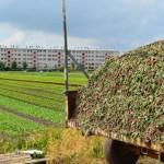 L'accaparement des terres agricoles