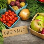 Le bio peut-il nourrir le monde ?