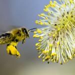 Pourquoi avons-nous besoin des abeilles ?
