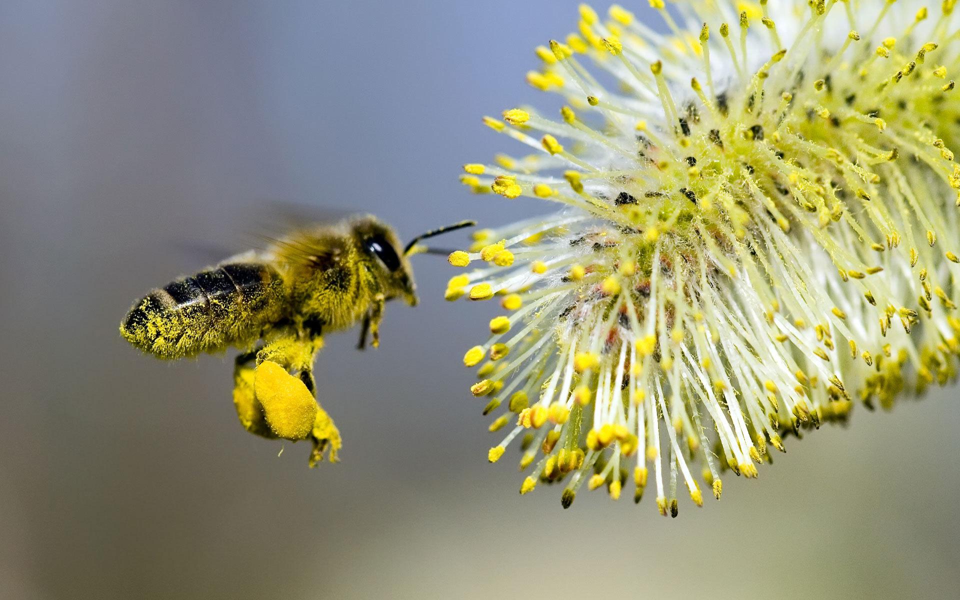 Pourquoi avons nous besoin des abeilles alimentation - Qu est ce qui fait fuir les abeilles ...