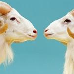 Demain tous pareils ? Quel avenir pour les animaux clonés ?