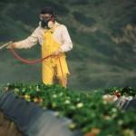 Malades des pesticides, des salariés de Triskalia continuent le combat