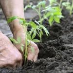 Concilier agriculture et biodiversité