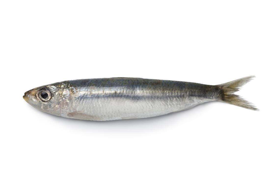Pourrons nous encore manger du poisson dans vingt ans for Manger pour poisson