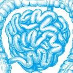 100 000 milliards de bactéries dans notre intestin : un monde à découvrir !