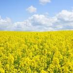 La Confédération paysanne et Slow Food pour le futur de l'agriculture