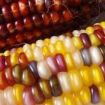 L'industrie agroalimentaire veut contrecarrer sa mauvaise image