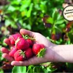 Léa ramène ses fraises