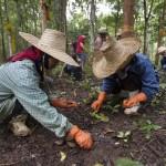 Pur Projet : l'agriculture qui donne de l'air à la planète