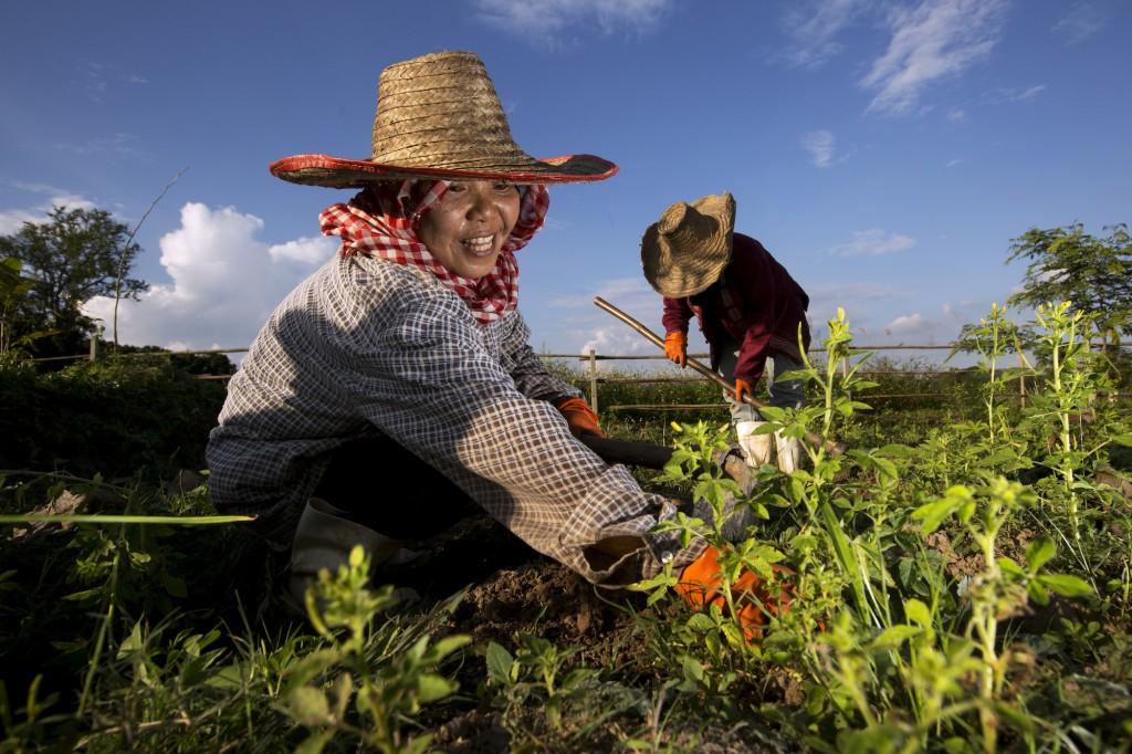 Pur Projet est né sous l'impulsion de Tristan Lecomte, fondateur d'Alter Eco, entreprise pionnière du commerce équitable. Aujourd'hui, le réseau est composé de 50 organisations soit plus de 150 000 planteurs répartis dans 30 pays du Sud. © Christian Lamontagne / Pur Projet