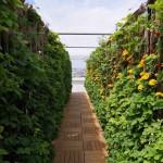 La ville de Paris lance sa plateforme d'innovation sur l'alimentation