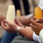 Monsanto se glisse dans un projet de réforme agricole