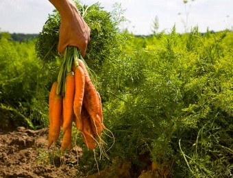 agriculture-bio-1