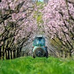 France bans controversial pesticide used on cherries