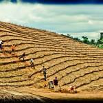 Nigeria : les violences affectent les récoltes, les prix flambent