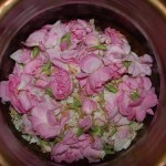La rose de Damas, flétrie par la guerre