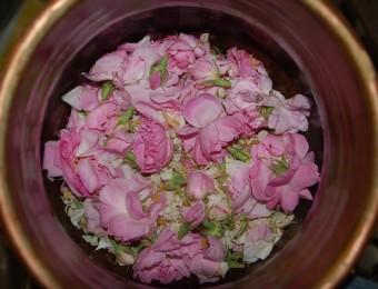 rose+damas