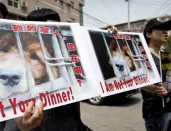 Manifestations Yulin