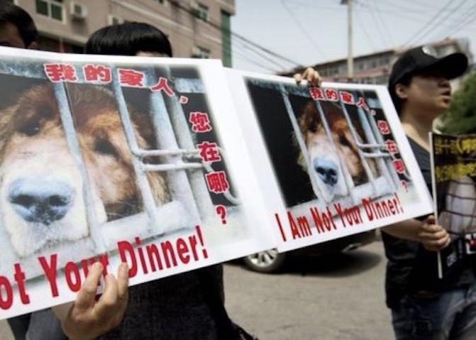 Manifestations Yulin