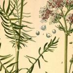 Les herbiers, une science ringarde?
