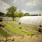 La permaculture, un modèle qui a de l'avenir