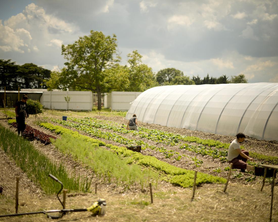 La permaculture un mod le qui a de l 39 avenir - La permaculture c est quoi ...