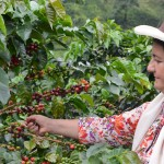 Despite the war, Colombian women are betting on quality coffee grains