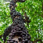 Les produits des forêts brésiliennes à la conquête du monde