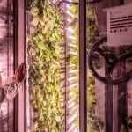 Ces start-up prêtes à révolutionner l'agriculture