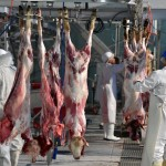 'Respect for animals in slaughterhouses' introduced into the French National Assembly today