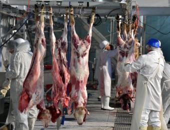 Dans un abottoir de mouton : le bien-être animal au coeur des discussions à l'Assemblée nationale