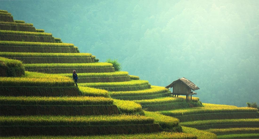 riz chine