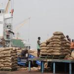 Chute des cours du cacao: «bombe sociale» en Cote d'Ivoire